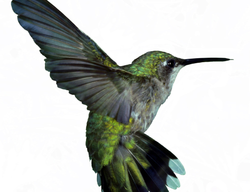 Google Hummingbird: More Significant Than Businesses Think